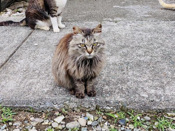 青島 お座りして待つ猫