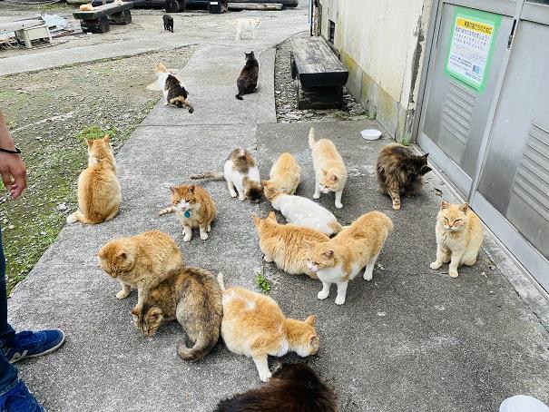 青島 猫にえさやり