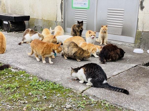 青島 猫にエサをあげる