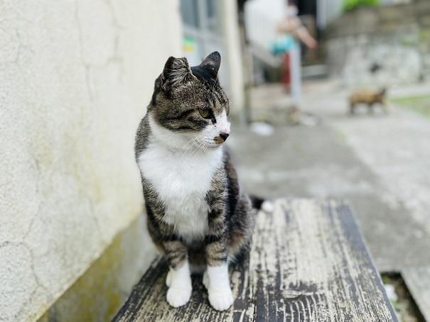 青島 ベンチに座る猫