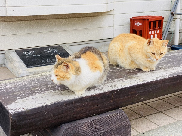 青島 2匹の猫