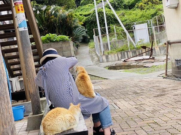 青島 懐っこい猫