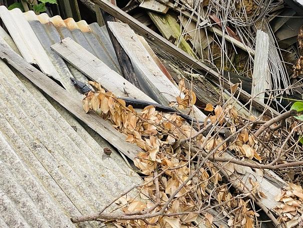 青島 廃屋のウナギ