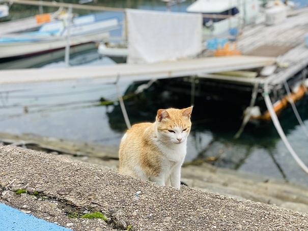 青島 漁港の猫