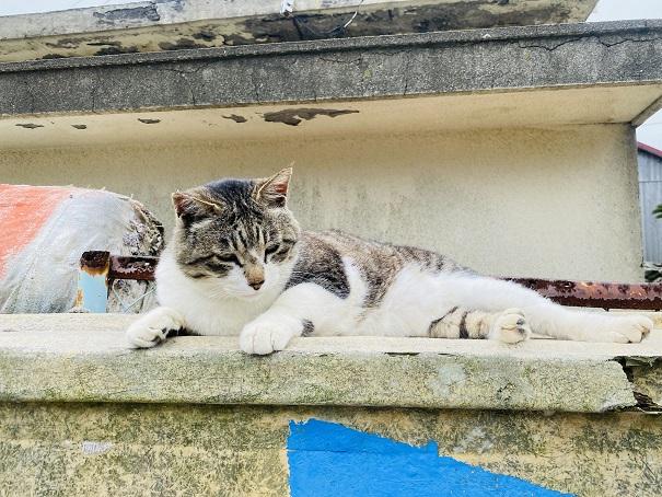 青島 えさやり場案内の上の猫