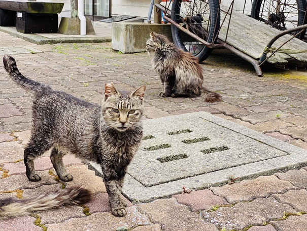 青島 コミュニティセンターの前の猫
