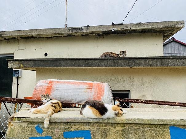 青島 3匹の猫