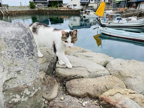 青島 かわいらしい猫