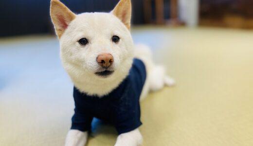倉敷豆柴カフェ 愛らしい豆柴犬と触れ合える 倉敷美観地区
