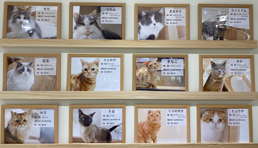 Moff animal cafeアリオ倉敷店猫紹介1