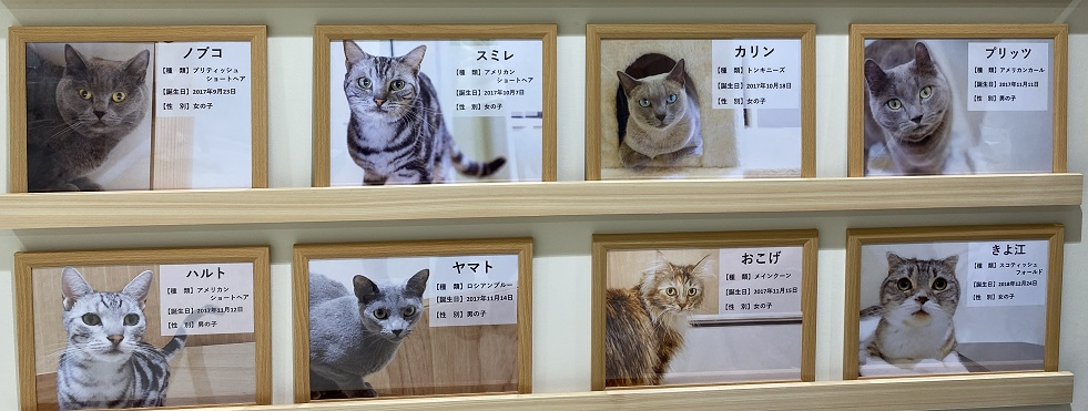 Moff animal cafeアリオ倉敷店猫紹介2