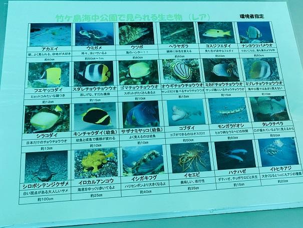 竹ヶ島で見れる魚2