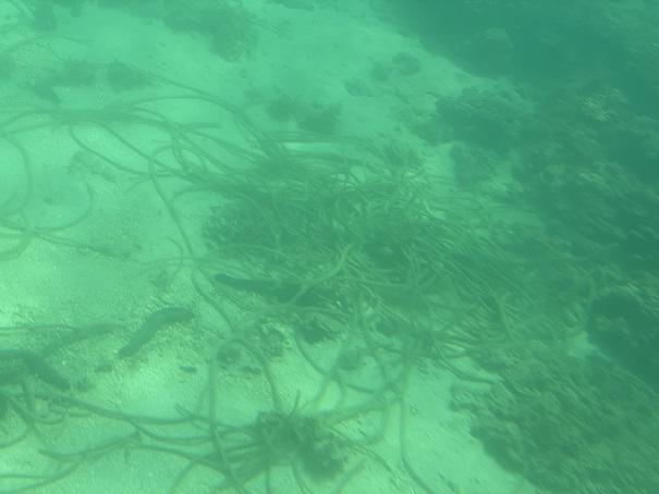 竹ヶ島海の中 海藻