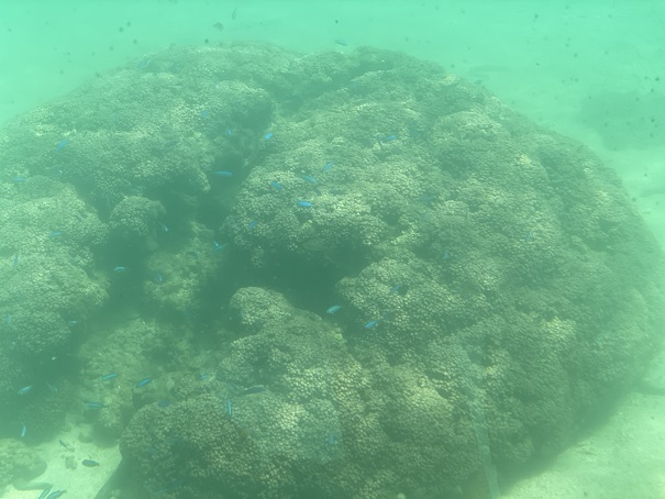 竹ヶ島の海の中 サンゴ
