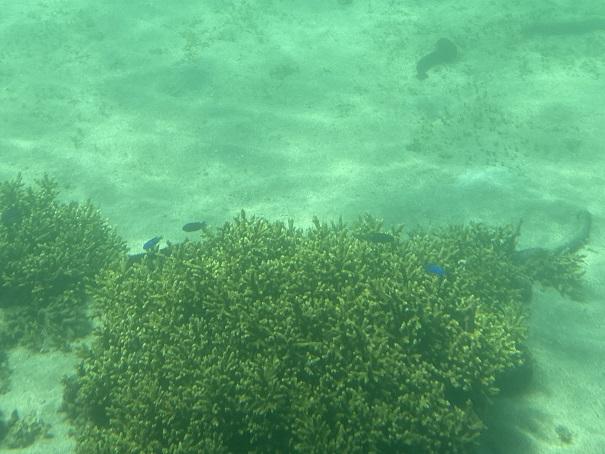 竹ヶ島の海の中  青い魚