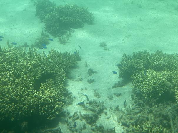 竹ヶ島の海の中