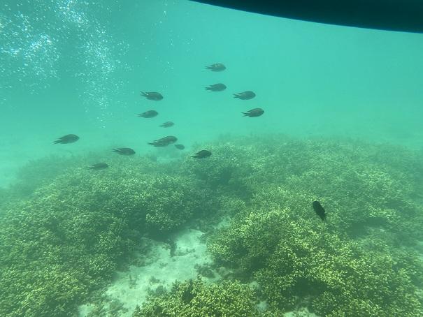 マリンジャム 竹ヶ島の魚