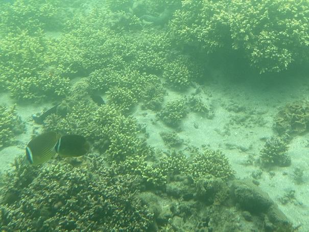 マリンジャム 竹ヶ島の海の中2