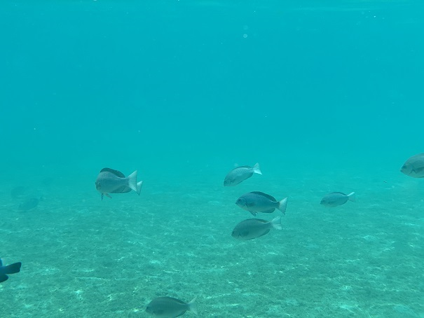 魚を見つける