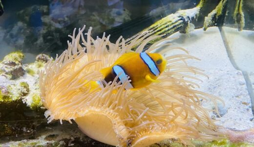 島の小さな水族館 海洋自然博物館マリンジャム 竹ヶ島