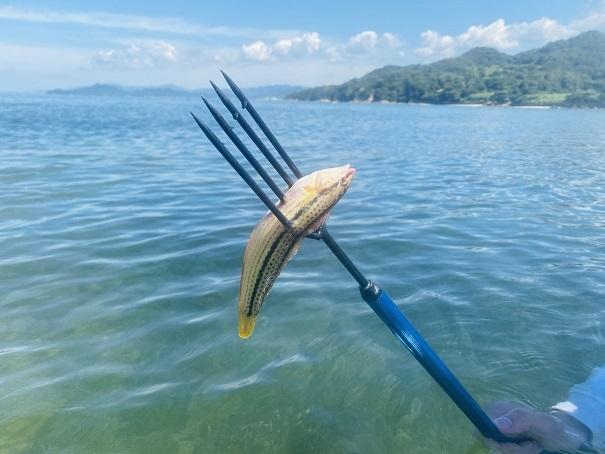 銛で魚をゲット