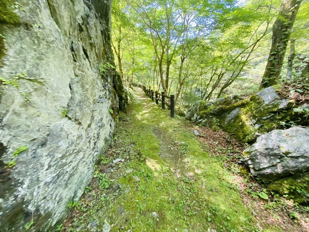 瀬戸川渓谷 緑豊かな遊歩道