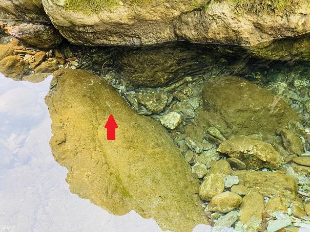 アメガエリの滝 魚
