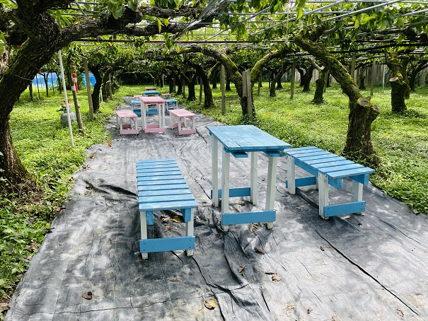 フルーツガーデンやまがた 梨狩りテーブルと机