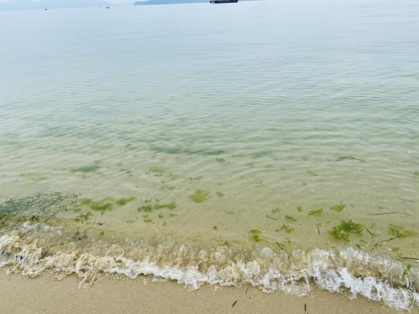 星の浦海浜公園 水質