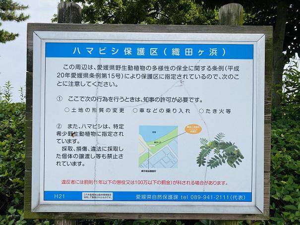 織田ヶ浜海水浴場 ハマビシ保護区