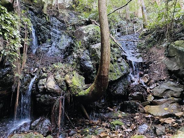 薬師谷渓谷 岩から木