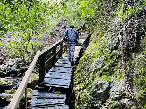 薬師谷渓谷 木の遊歩道