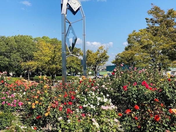 伊予三島運動公園 バラ園時計台の下